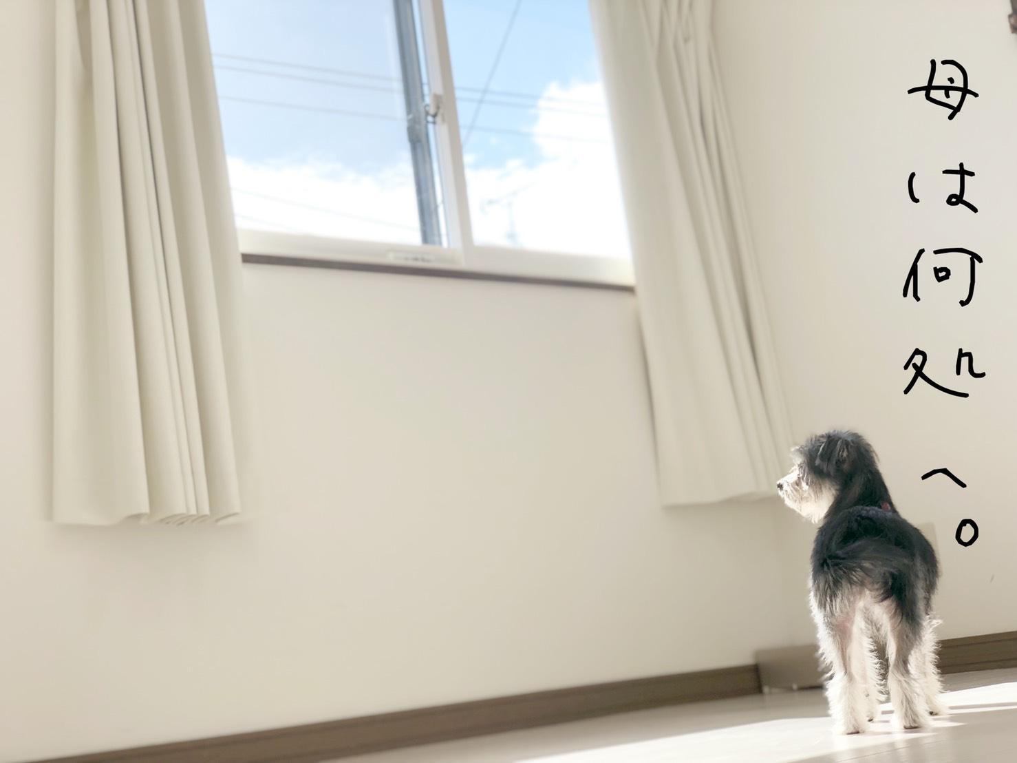 2019/08/13(火) ドッグホテル